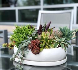 Succulent Container