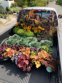 Fall Annuals & Perennials