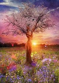 arbre femme.jpg