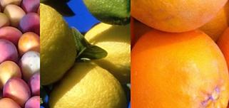 la belle orange.png
