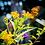 Thumbnail: Pollinator's Delight
