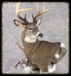 Wisconsin Country Living Taxidermy