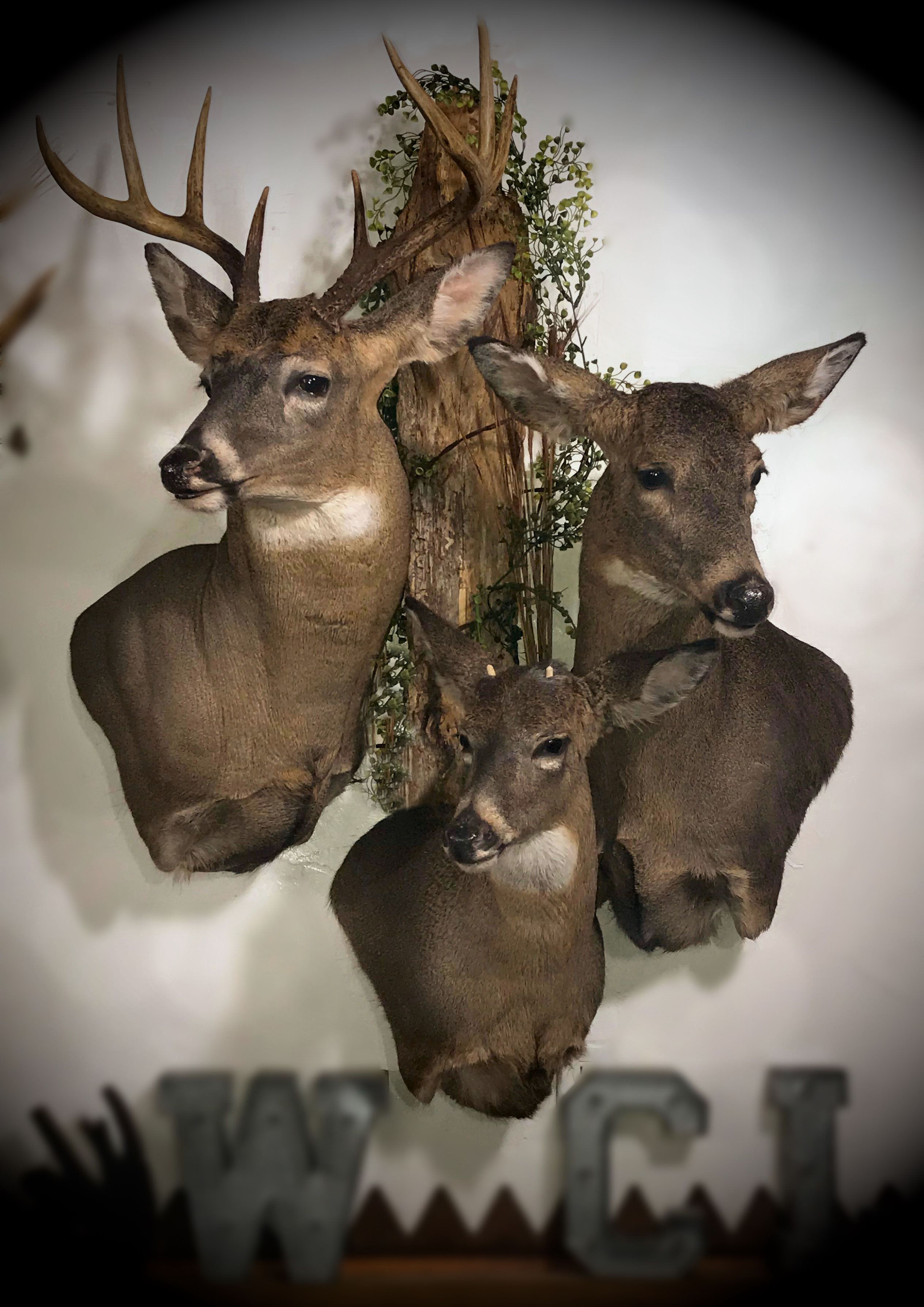 WCL Taxidermy 2019
