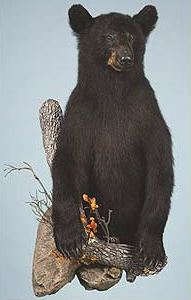 Bear 1/2 Size Stand Up