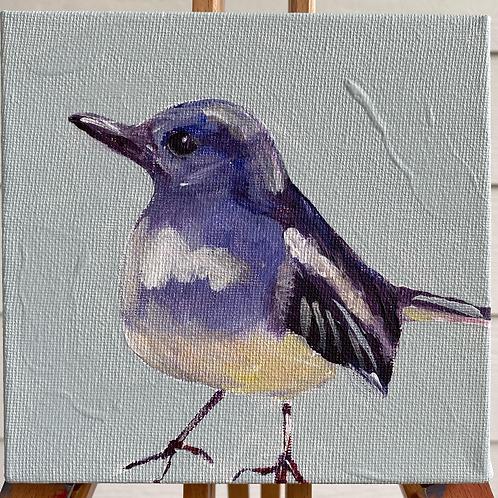 Blue Bird - Finch 6X6