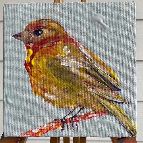 Yellow Finch Bird - 6X6