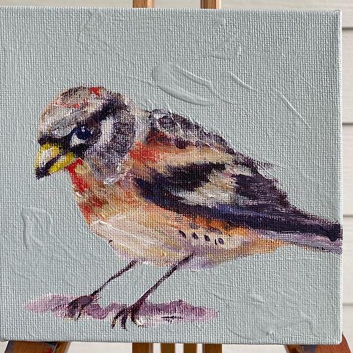 Hawk Bird - Finch 6X6