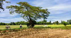 rural landscape - Robecco sul Naviglio