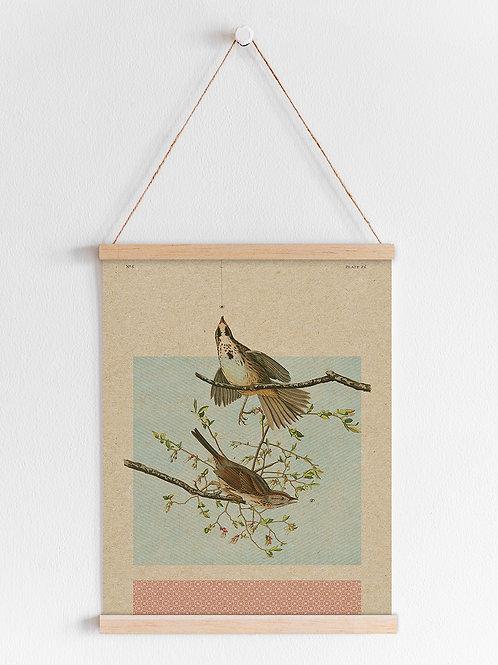 פוסטר - ציפורים
