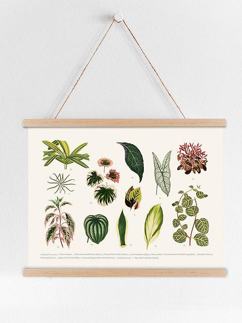 פוסטר - צמחים