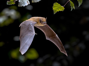 Pip bat 1 TRIAL dreamstime_xxl_159123368