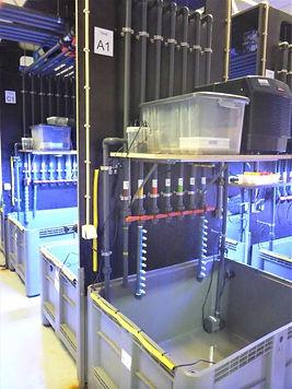 Laboratório Moss_os tanques 1.JPG