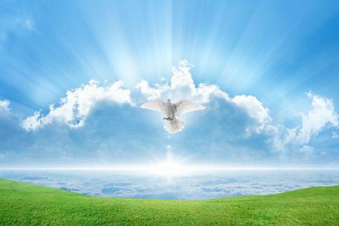 Holy spirit bird flies in skies, bright
