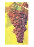Note Card grapes copy.jpg