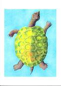 Note Card turtle.jpg