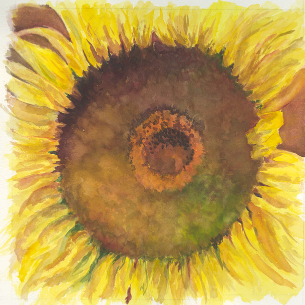 SUNFLOWER HI RES.jpg
