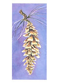 Note Card pine cone copy.jpg