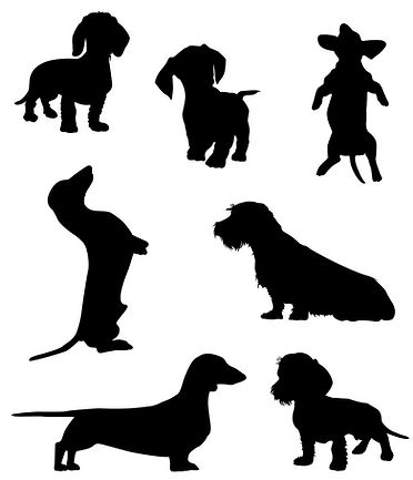 dachshund-2-vector-19378716.jpg