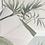 Thumbnail: Тропикана