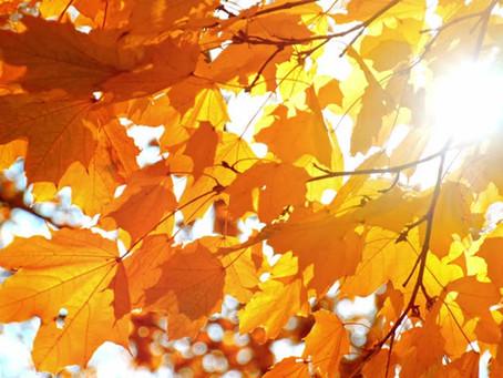 Autumn ~ Steadiness Amidst Change