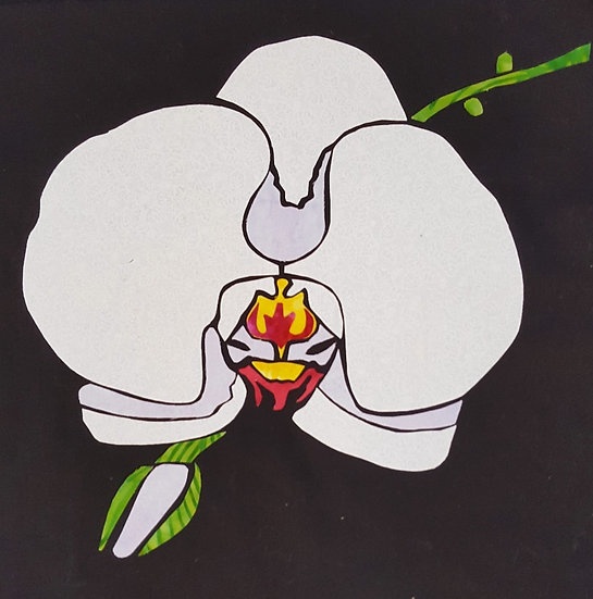 Moth Orchid  - Individual 12x12