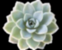 tiny-succulent-2.png