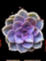kisspng-succulent-plant-garden-cactaceae