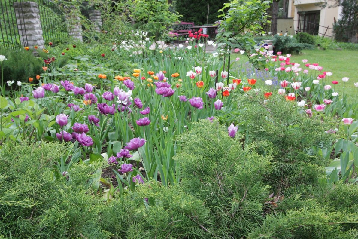 J_architects_Tulip Garden_07