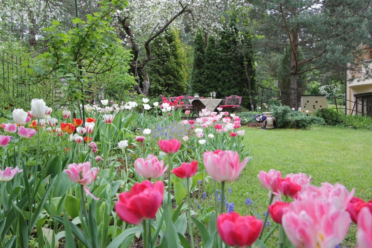 J_architects_Tulip Garden_22