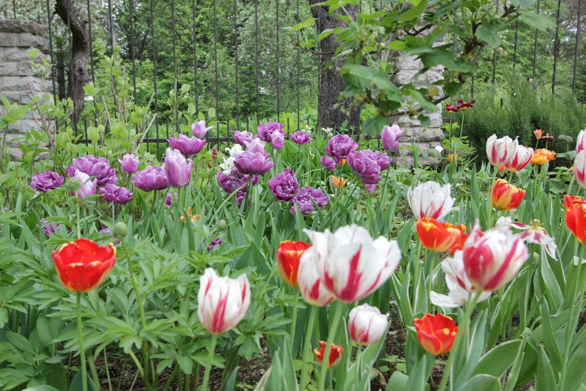 J_architects_Tulip Garden_08