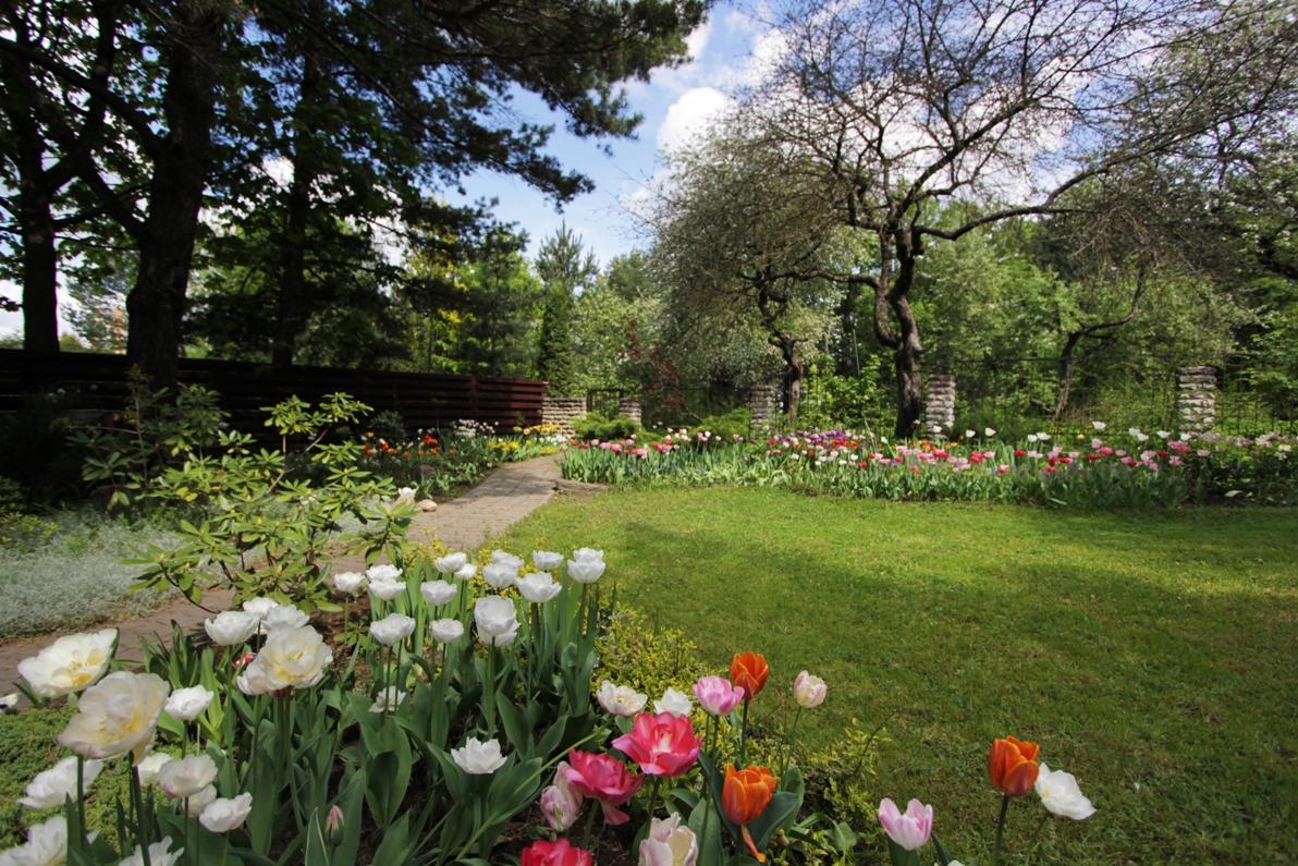 J_architects_Tulip Garden_03