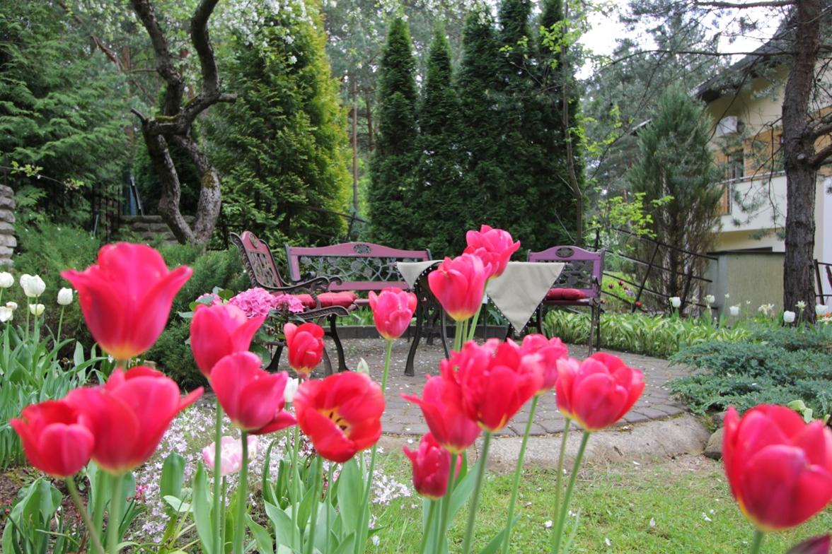 J_architects_Tulip Garden_11