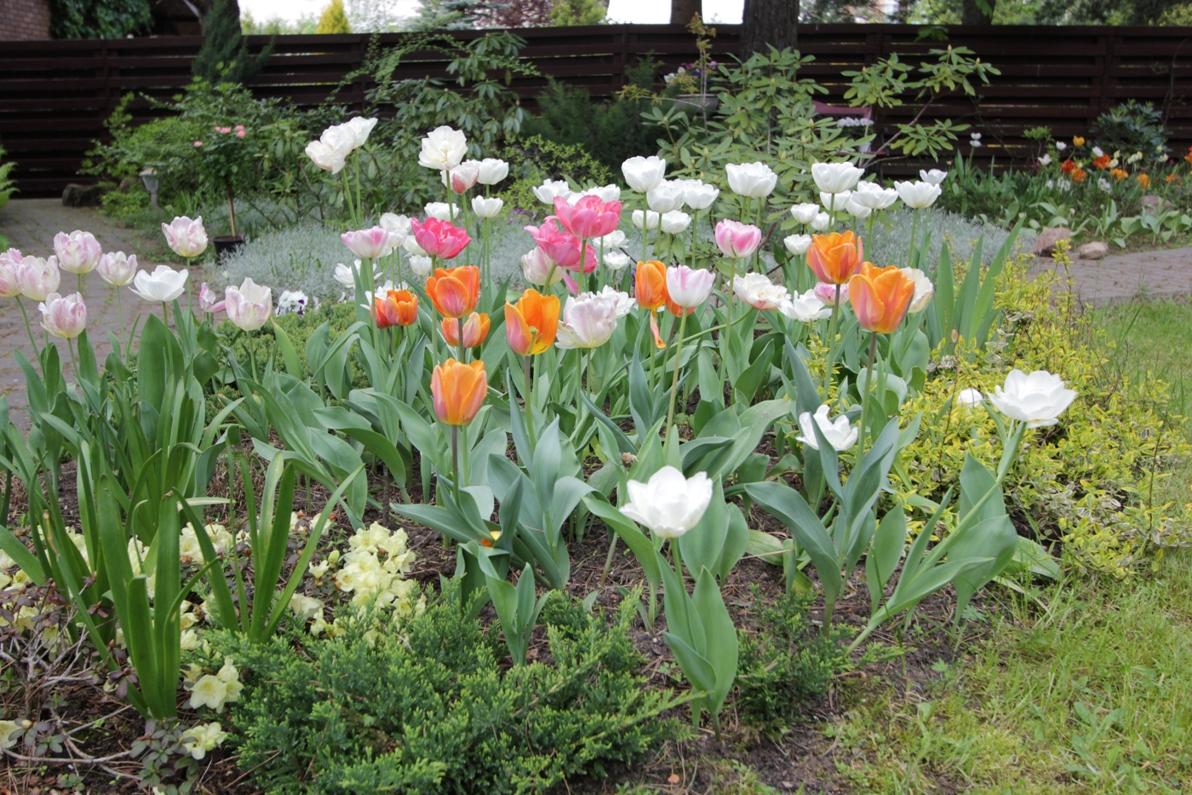 J_architects_Tulip Garden_12