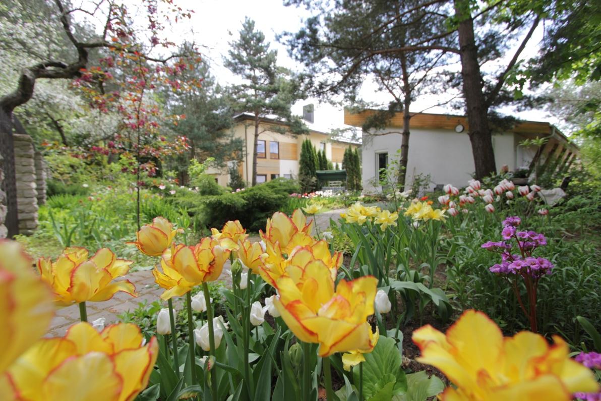 J_architects_Tulip Garden_18