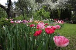 J_architects_Tulip Garden_05