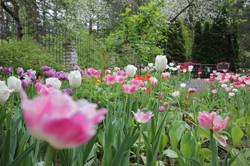 J_architects_Tulip Garden_06