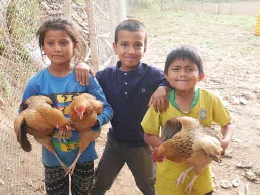 Nepal Chicken Farm