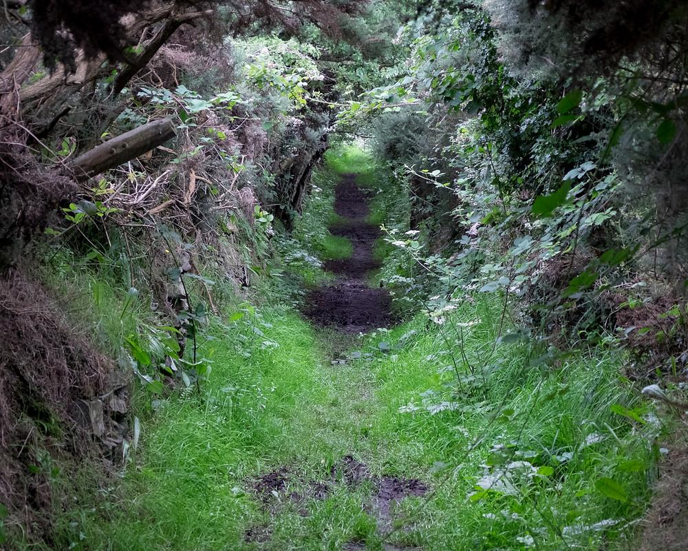 Pathway to Ballynoe Stone Circle, Downpatrick, County Down, Ireland