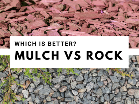 Mulch or Rock, What's Better!?