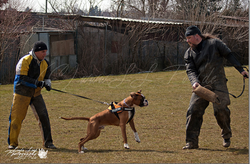 Training am 01.04.2013 (Ostermontag) 16.PNG