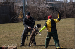 Training am 01.04.2013 (Ostermontag) 14.PNG