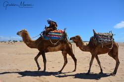 2013 Maroc
