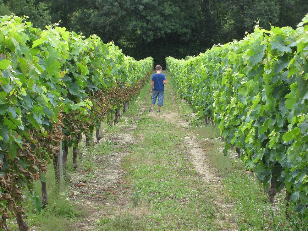 vigne-queyrac-medoc-atlantique.jpg