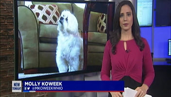 MercyPets on the News on Giving Tuesday 2020