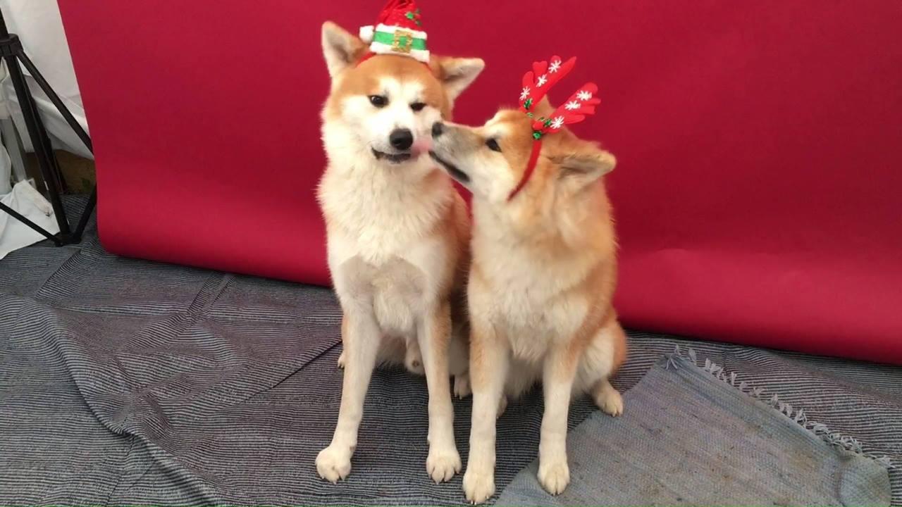 1. Hundeweihnachtsmarkt