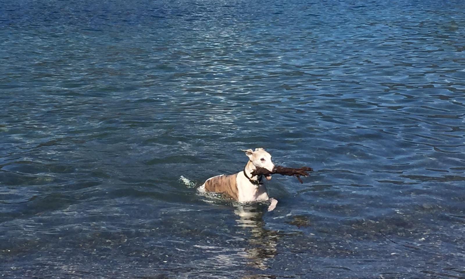 Marvin enjoying a swim.