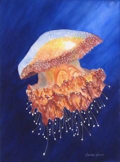 Jelly Fish #1