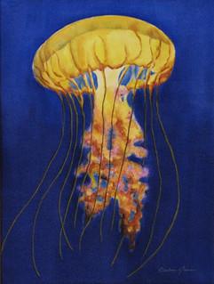Jelly Fish #3