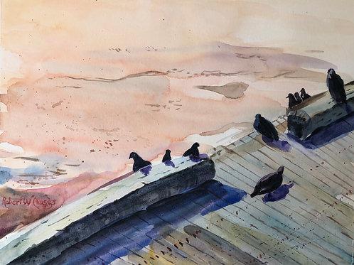 state pier pigeons