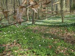Wald Nahmi